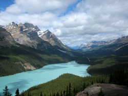 Beautiful Peyto Lake in the Canadian Rockies